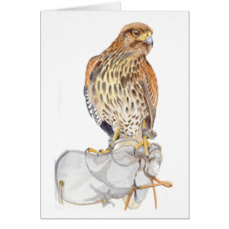 Harris Hawk on Glove birthday Card
