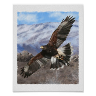 Harris Hawk- pastel Poster