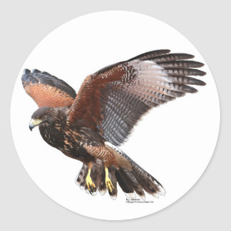 Harris Hawk Round Sticker