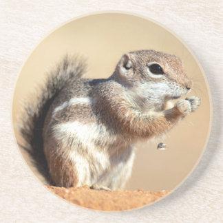 Harris's antelope squirrel (Ammospermophilus) Coaster