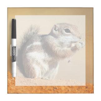 Harris's antelope squirrel (Ammospermophilus) Dry Erase Board