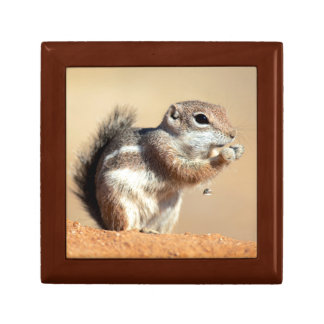 Harris's antelope squirrel (Ammospermophilus) Gift Box