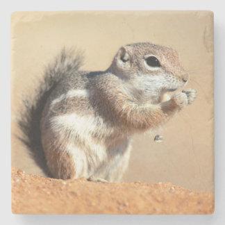 Harris's antelope squirrel (Ammospermophilus) Stone Coaster