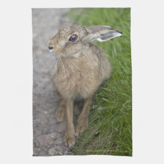 Harry Hare Kitchen Towel