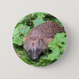 Harry Hedgehog 6 Cm Round Badge