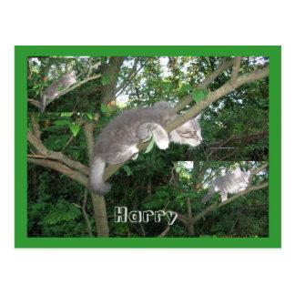 Harry the Cat Climbing A Tree Postcard