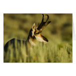 Hart Mountain National Antelope Refuge, Oregon, Greeting Card