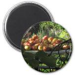 Harvest Apples Magnets