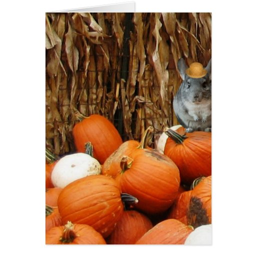 Harvest Chinchilla Cards