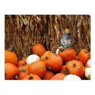 Harvest Chinchilla Postcard