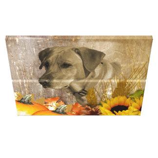 Harvest Labrador Retriever Canvas Print