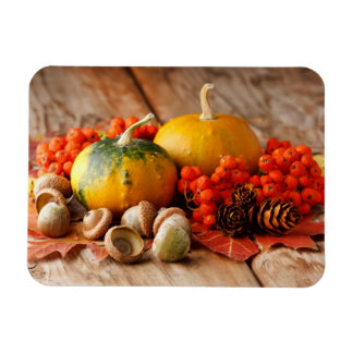 Harvested pumpkins with fall leaves rectangular photo magnet