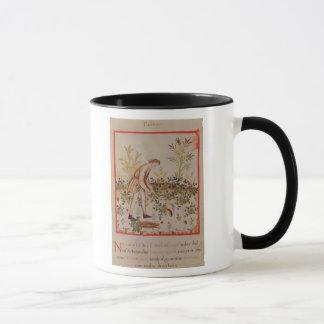 Harvesting Parsnips from 'Tacuinum Sanitatis' Mug