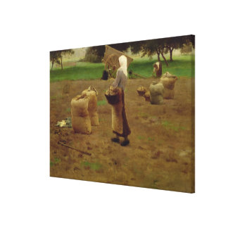 Harvesting Potatoes Canvas Print