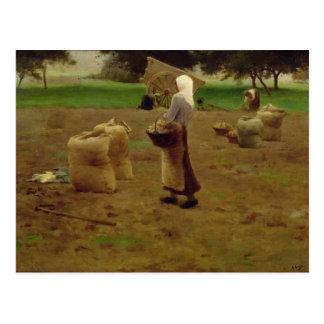 Harvesting Potatoes Postcard