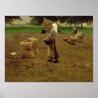 Harvesting Potatoes Poster