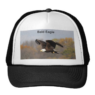 Hat Bald Eagle with fish