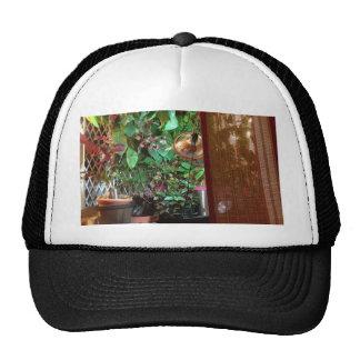 Hat with Indoor nature photo