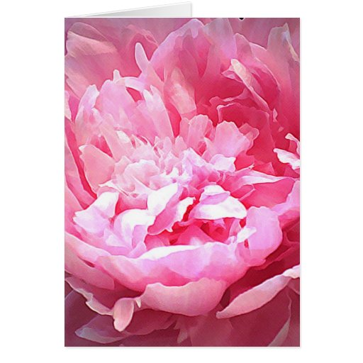 Hatched Pink Peony Card