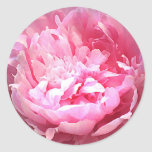 Hatched Pink Peony Classic Round Sticker