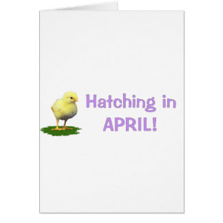 Hatching in April! Maternity/Pregnant Due In April Card