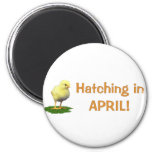 Hatching in April! Maternity/Pregnant Due In April Magnets