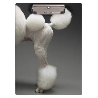 Haunches of Poodle, on grey background Clipboard
