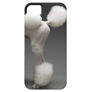Haunches of Poodle, on grey background iPhone 5 Cases
