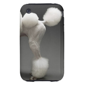 Haunches of Poodle, on grey background Tough iPhone 3 Cover