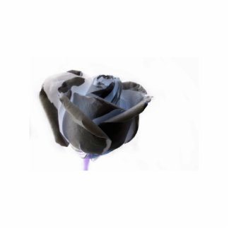 Haunted looking black white grey rose image standing photo sculpture