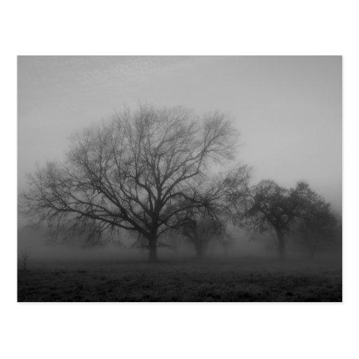 Haunting Fog Post Cards
