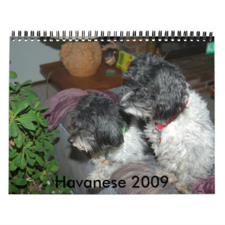 Havanese 2009 wall calendar