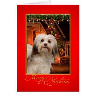 Havanese Christmas Card
