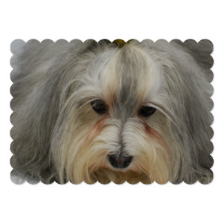 Havanese Dog Breed 13 Cm X 18 Cm Invitation Card