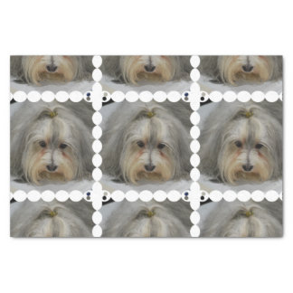 Havanese Dog Breed Tissue Paper