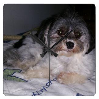 Havanese Dog,  Square Wall Clock