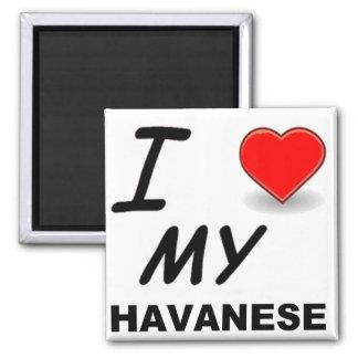 havanese love magnet