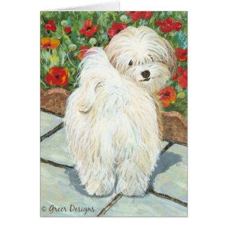 Havanese n Poppies Art Print Gifts & Cards