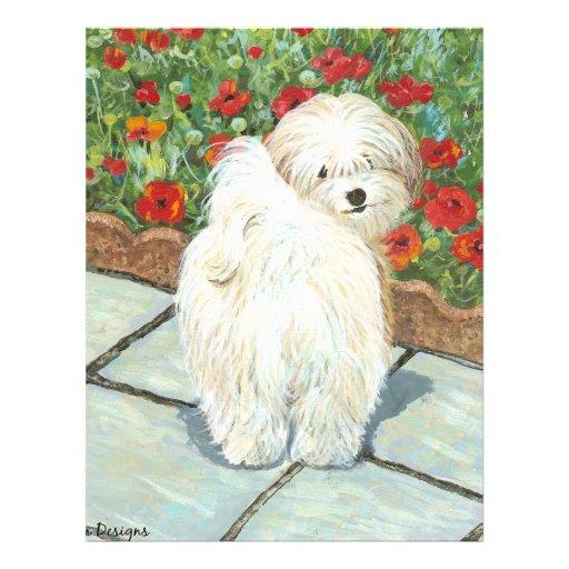 Havanese n Poppies Art Print Gifts & Cards Flyer