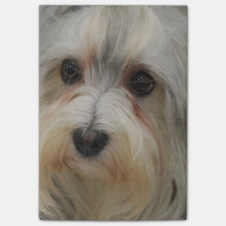 Havanese Post-it Notes