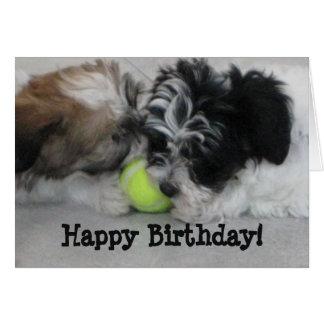 Havanese Puppies Happy Birthday Greeting Card