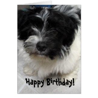 Havanese Puppy Birthday Card