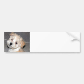 Havanese Puppy Bumper Sticker