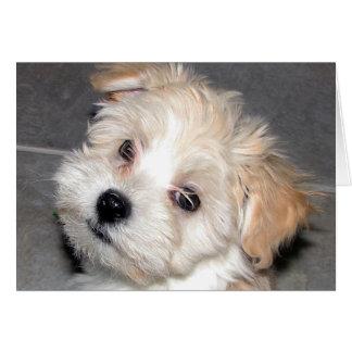 Havanese Puppy Card