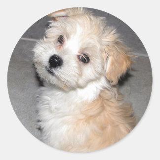 Havanese Puppy Classic Round Sticker