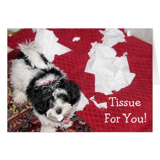 Havanese puppy - Get Well Card - Tissue For You!