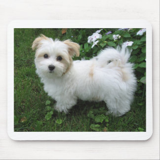 Havanese Puppy in the Garden Mouse Mat