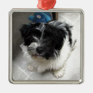 Havanese Rescue Puppy black and white Silver-Colored Square Decoration