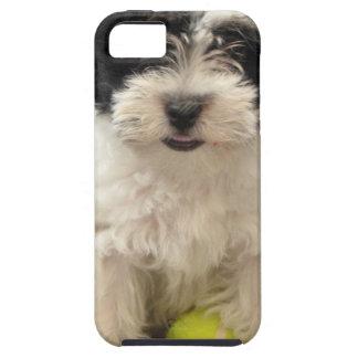 Havanese Rescue Puppy Black White iPhone 5 Cases