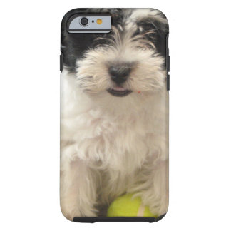 Havanese Rescue Puppy Black White Tough iPhone 6 Case